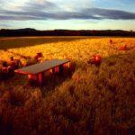 dream field